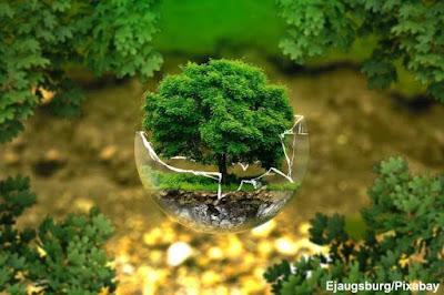 engenharia ambiental, engenharia da vida, engenharia, sustentabilidade, meio ambiente, natureza, preservação ambiental, conservação da natureza, natureza e conservação, natureza, conservação, curso de engenharia ambiental, graduação