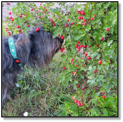 herbstlicher Spaziergang mit Hund, Lotte