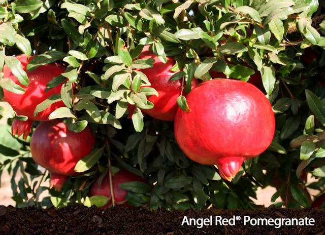Advantages of Pomegranate