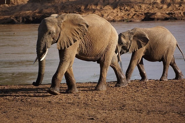 An elephant from the Masai village crossing the river with a calf.  - This Couple Had A 500 Day Worldwide Honeymoon… How They Did It Is So Simple.
