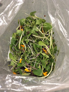 Permalink to Microgreens Salad