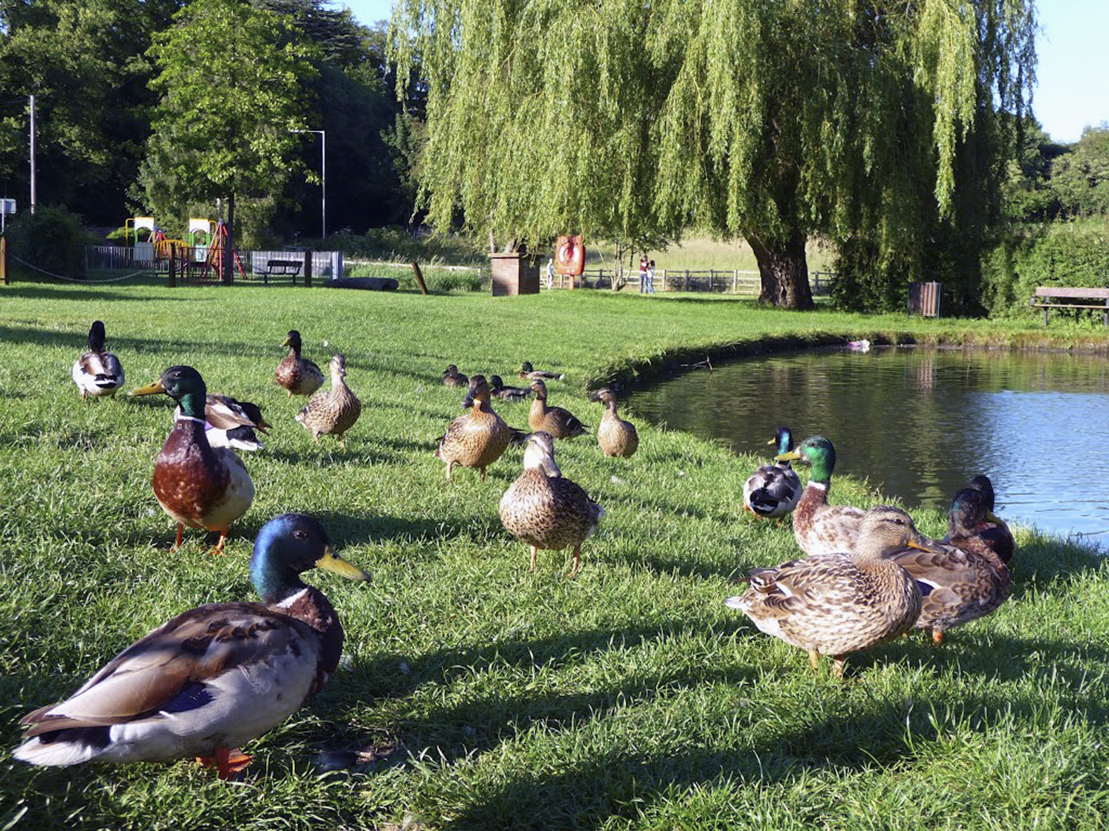Wyndlestraw designs the village of chalfont st giles for Design duck pond