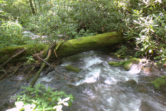 A tributary of a tributary to Cataloochee Creek