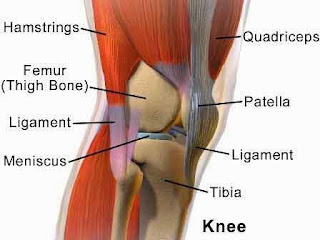 knee_structure