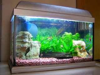 membuat-filter-aquarium-sendiri.jpg