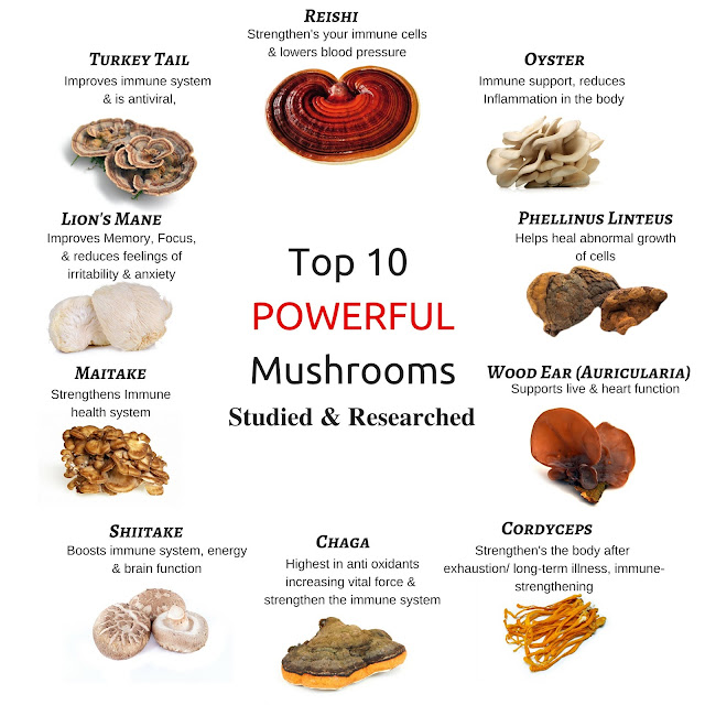 Benefits Of Adding Mushrooms To Your Diet By Barbies Beauty Bits And Naked Nutrient