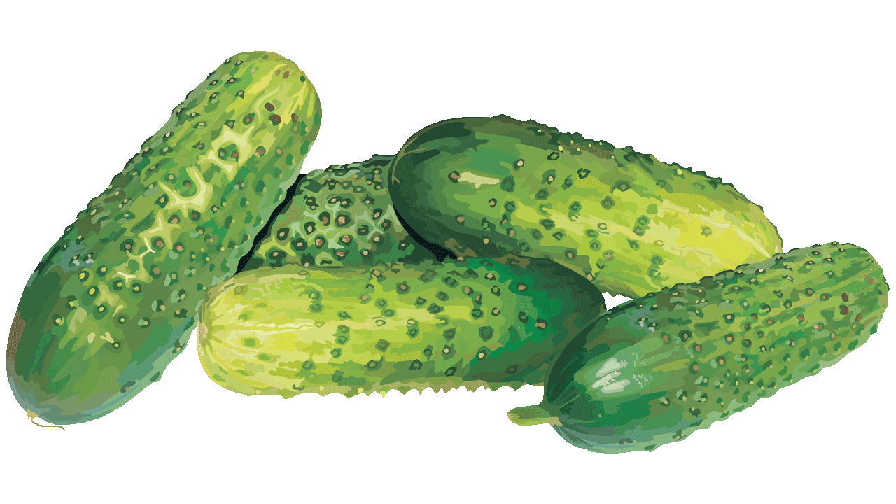 14 cool cucumber free vegetables clipart fruit names a z cucumber clipsrt cucumber clipart picture