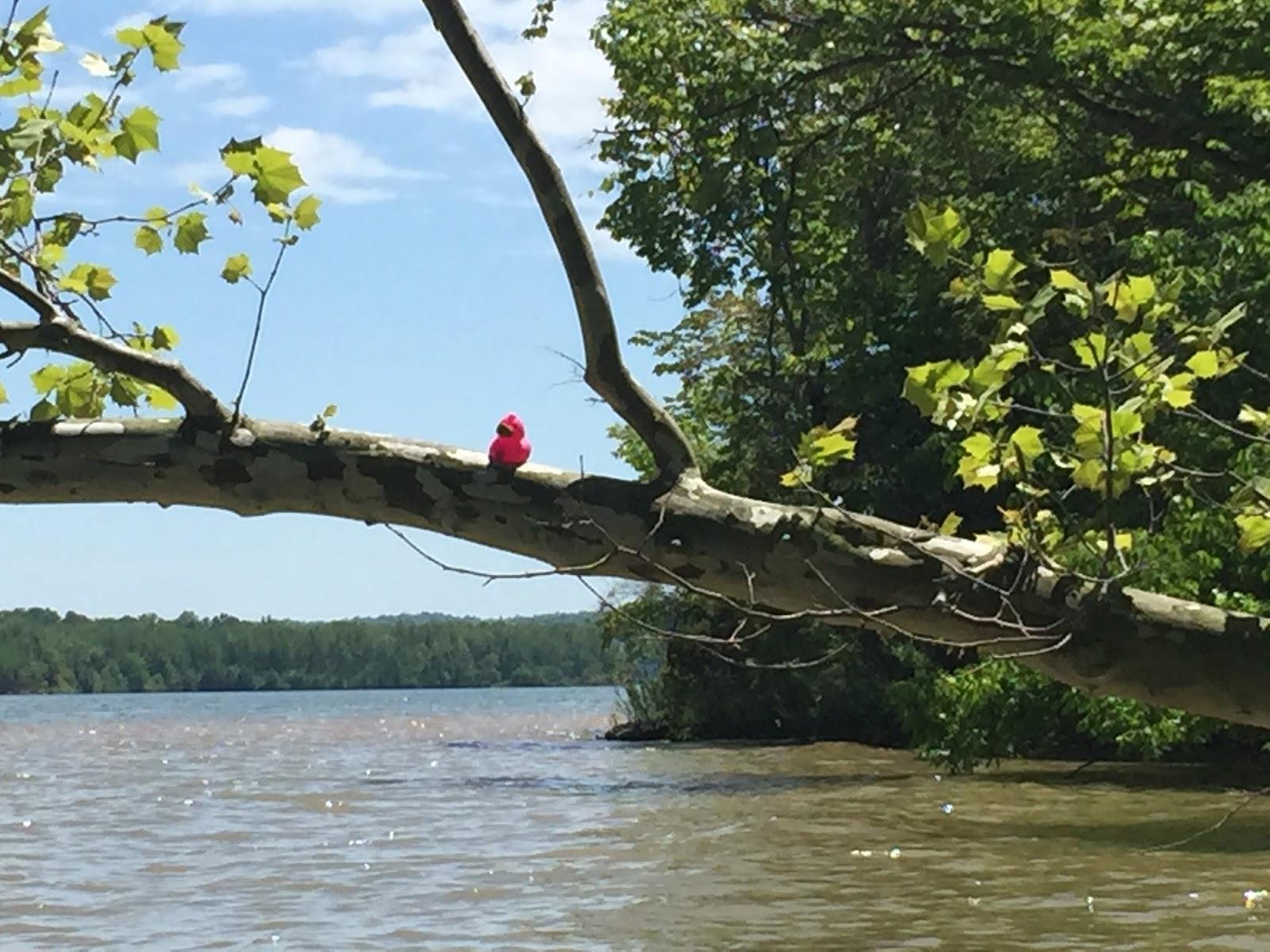 Kayaking Across Ohio: Senecaville Lake aka Seneca Lake ...