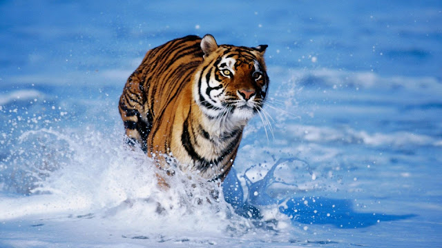 Beautiful animals wallpaper & backgrounds #35