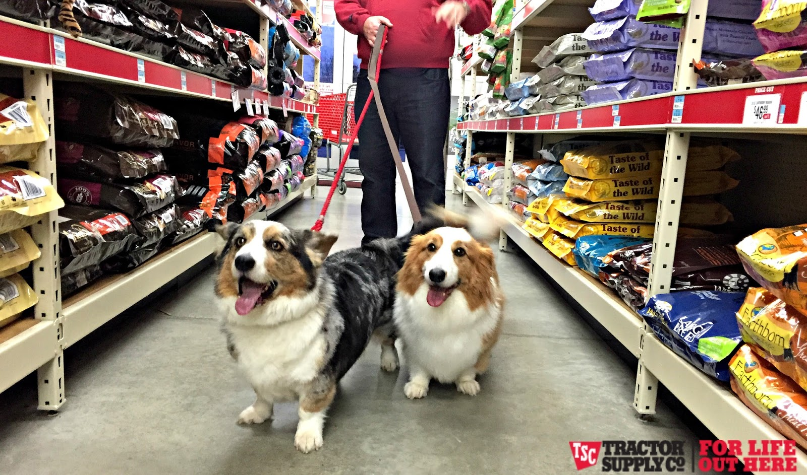 Tractor Supply Dog Beds