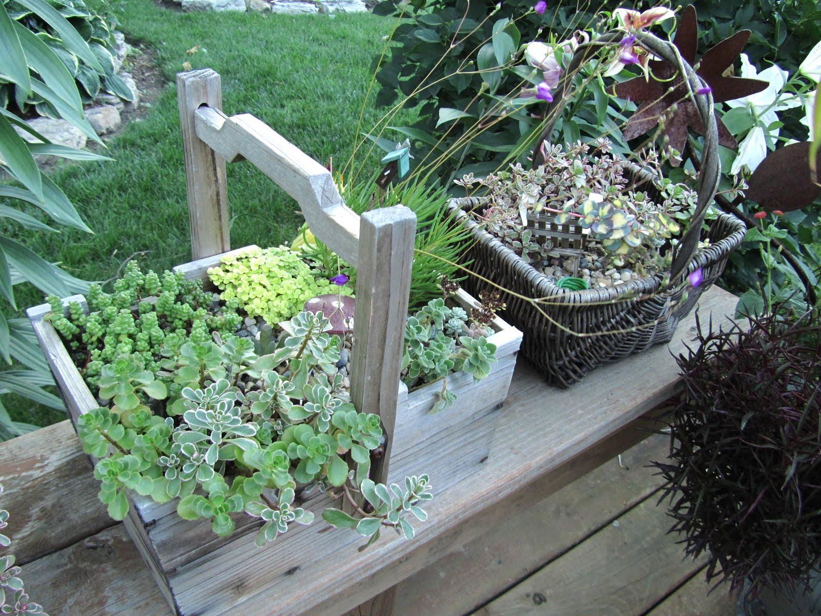 Cheesehead Gardening: Miniature Container Gardens / Fairy