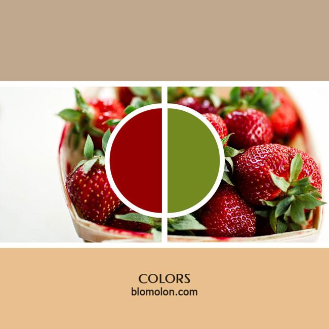variedad_en_color_color_10