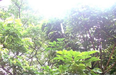 peeking sun after typhoon labuyo