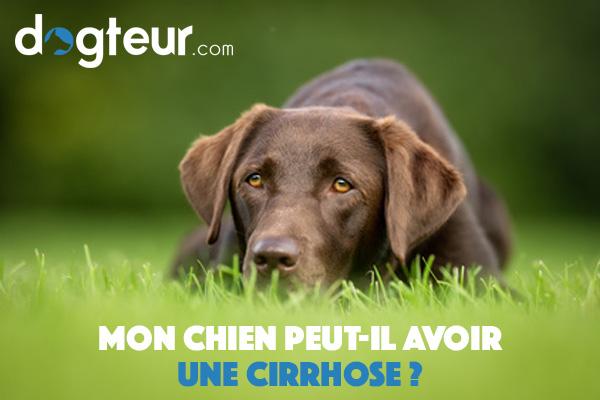Mon chien peut-il avoir une cirrhose ?