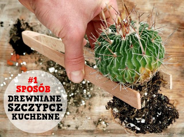 czym przesadzać kaktusy - szczypce