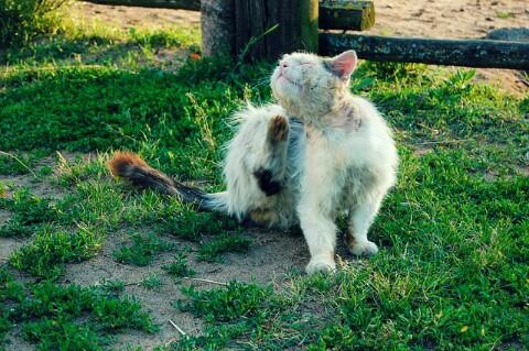 Obat Kutu Kucing Yang Paling Bagus Dan Mujarab Hobinatang