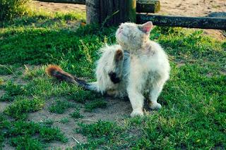 Obat Kutu Kucing Yang Paling Bagus dan Mujarab