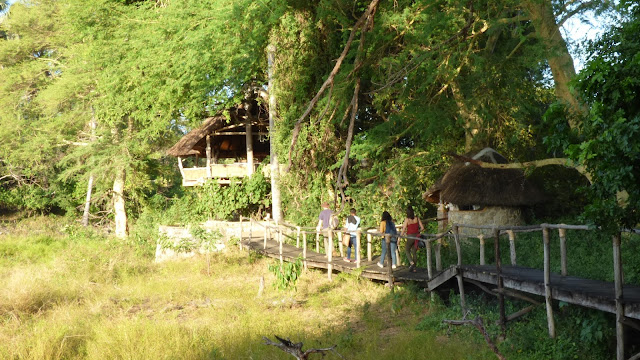 Mvuu Lodge, hidden amongst the trees and grasses of Liwonde National Park