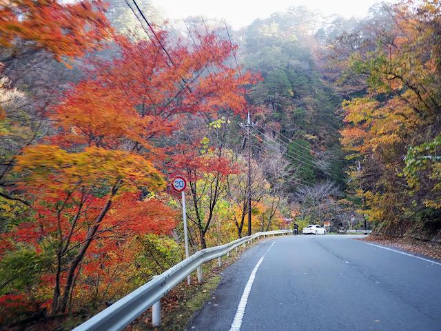 中津峡 紅葉