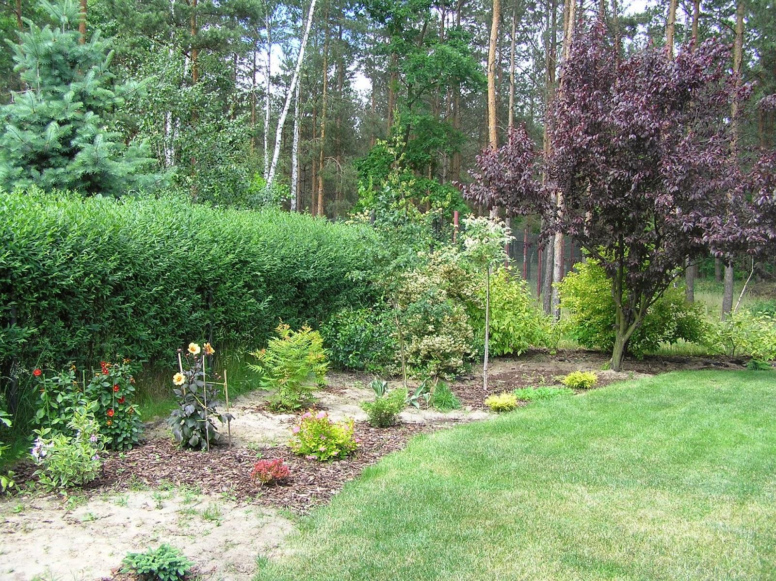 długa rabata w ogrodzie