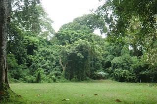 Hutan wisata Suranadi
