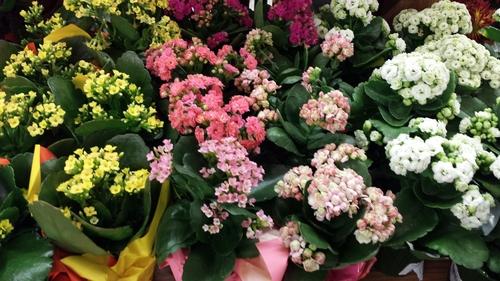 flower-gardening