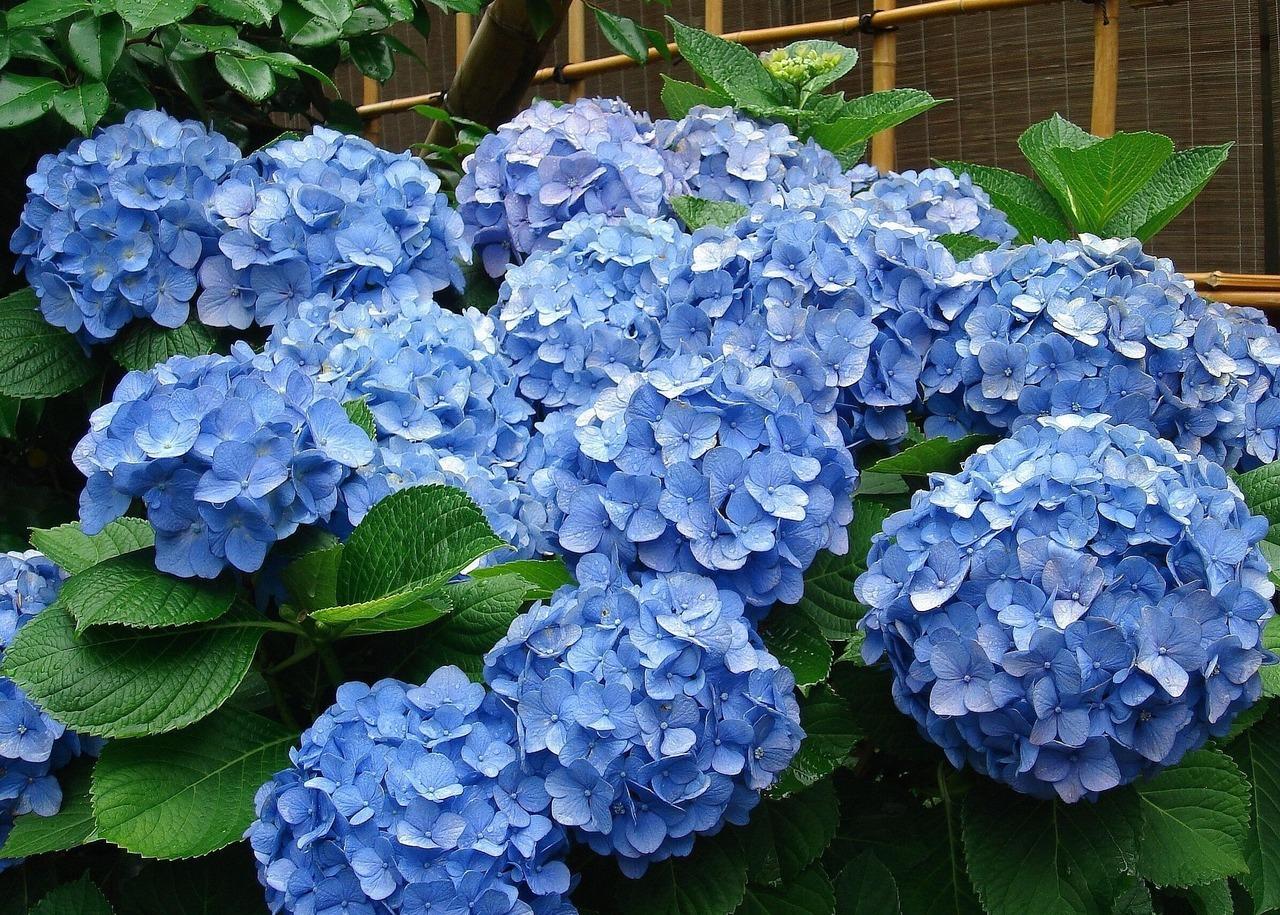 Pro Turf Landscaping Shrub Blog Series Part Six Specimen Plants