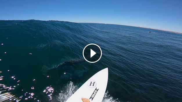 GoPro Awards Surfing with Dolphins