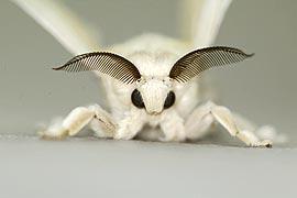 昆虫の脳でロボットを動かす