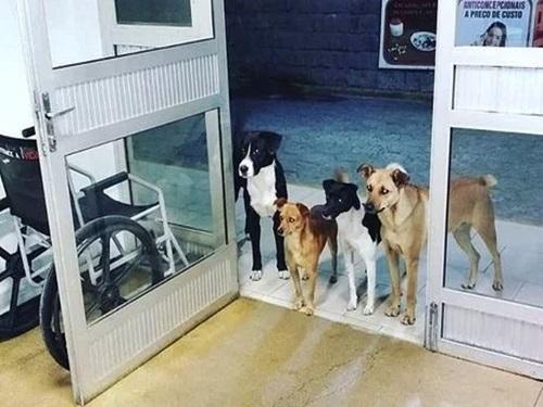 Em Rio do Sul/SC, cães acompanham e aguardam morador de rua na porta de hospital