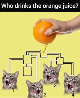 Who Drinks The Orange Juice