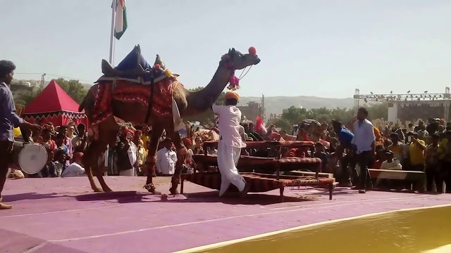 Nagaur Fair and Desert Festival