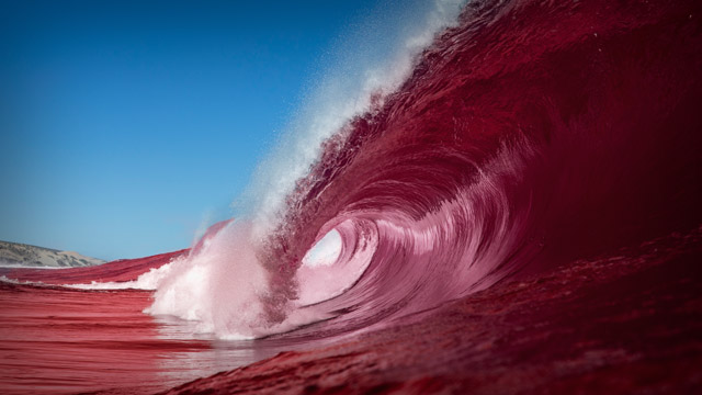 The Red Sea, Erythraean Sea, Indian Ocean, Underwater Wonder, tourism ,Travel