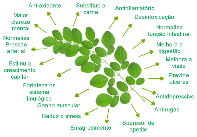 Moringa Oleifera – Tesouro Vegetal