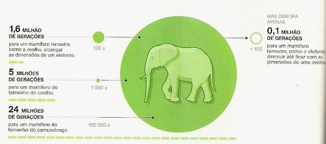 tamanho-elefante