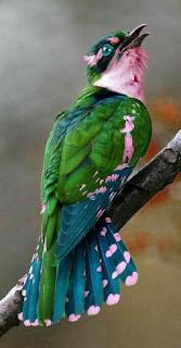Enteresan Kuş Resimleri Derlemesi