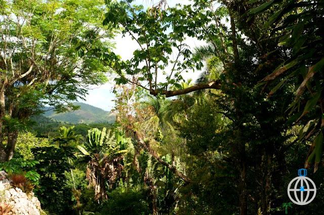 kuba las tropikalny