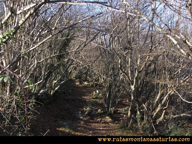 Ruta de las Foces del Rio Pendón y Varallonga: Atravesando bosque bajo