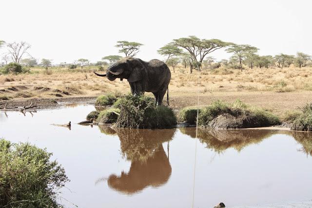 tansania safari afrikka matka norsu elefantti