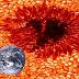 Mancha Solar maior que a Terra é filmada pela Nasa
