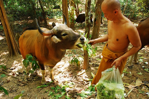 What Did the Buddha Say About Eating Meat