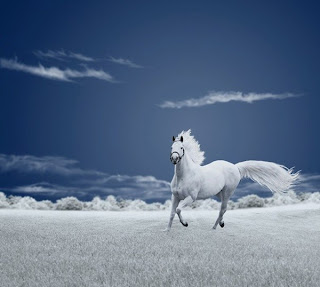 Fotografía de paisaje azul y blanco de caballo