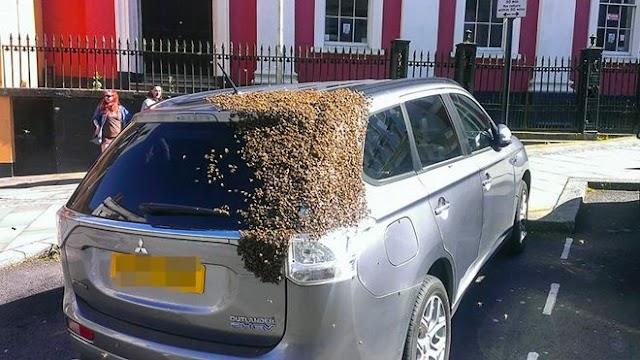 Τρόμερο περιστατικό: Δείτε τι έγινε με έναν αφεσμό μελισσιού και έναν οδηγό αυτοκινήτου...