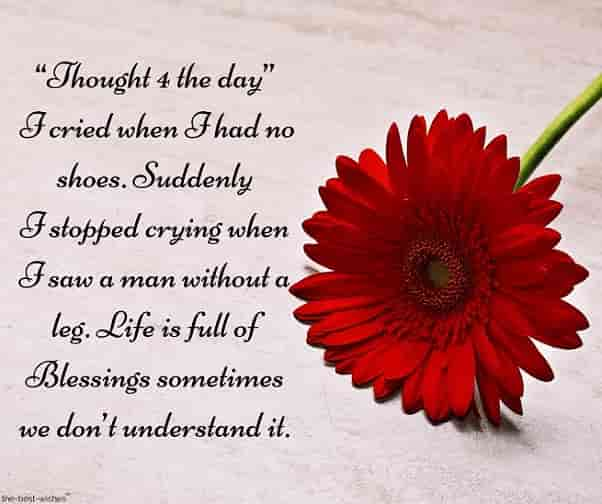 inspirational good morning sms with red flower