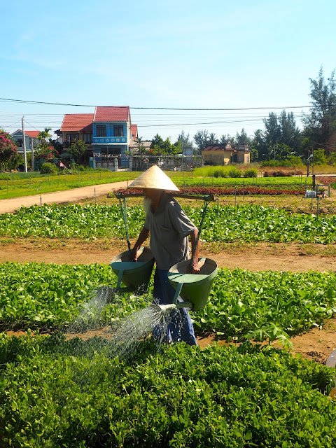 Old man watering his vegetable garden in the countryside around Hoi An, Vietnam