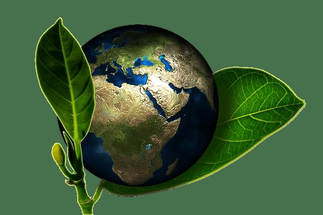 el mundo y la ecología
