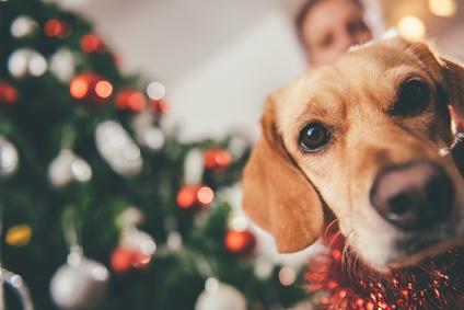 Cadeaux de Noël pour chien : lequel choisir ?