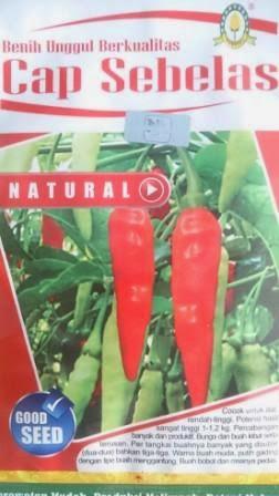Cabai Natural, Cabe Natural, Unggul, benih petani,tahan virus, buah lebat, benih cap sebelas, tahan layu, tahan cekaman calcium