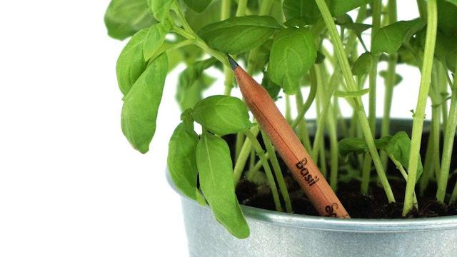 Un lápiz que 'se convierte' en plantas o verduras cuando se termina