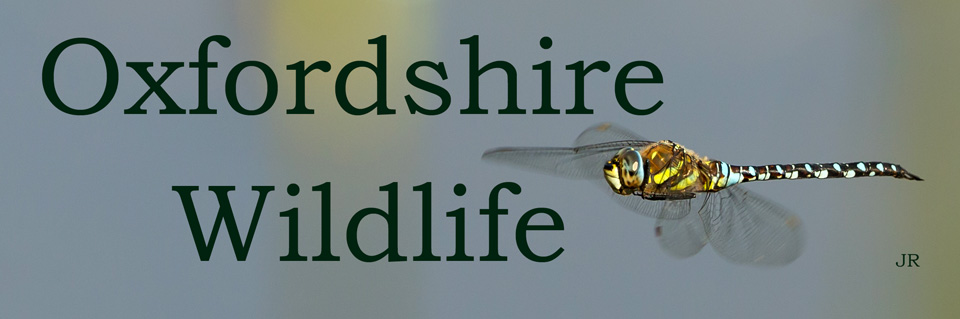 Oxfordshire Wildlife
